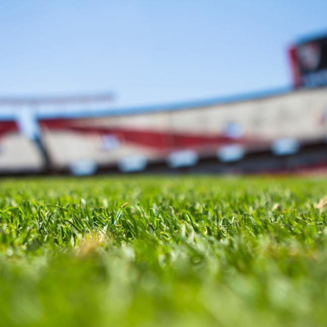 depth-of-field-field-grass